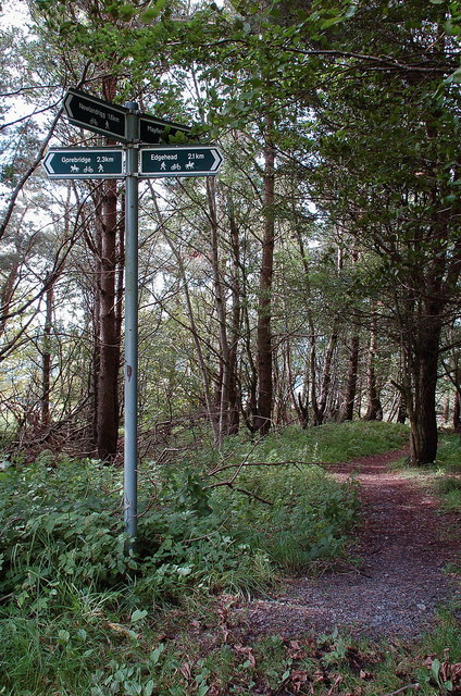Footpath sign in Camp Wood