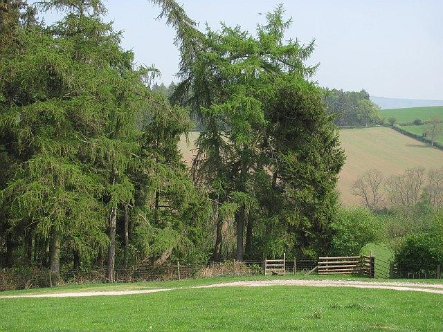 Woodland corner