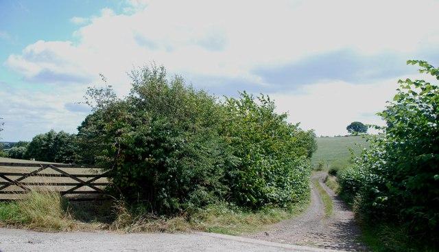 Farm Track & Gate, Newlands Lane