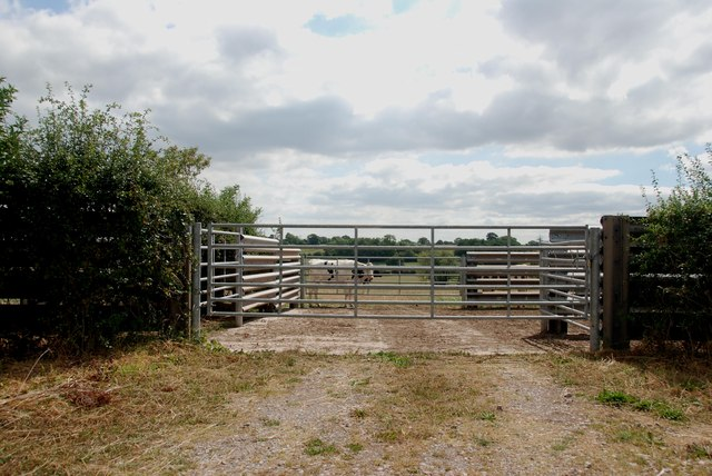 Cattle Holding Area, Newlands Lane