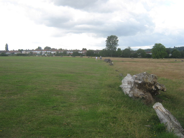 Timber logs in East Wickham Open Space
