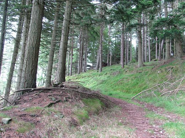 Track in Holeglen Wood