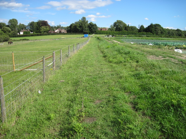 Footpath towards Winchester Road, Shedfield