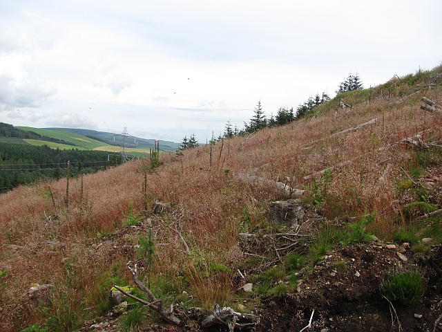 Clear felled and replanted area, Strathfinella Hill