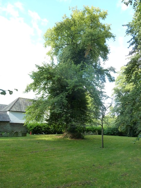 St Mary's, Micheldever: churchyard (6)