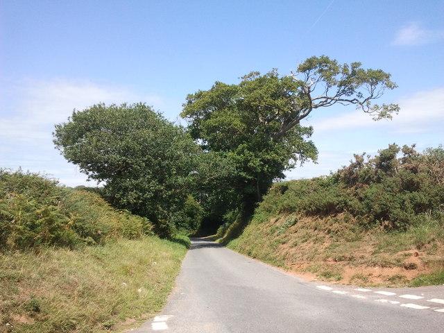 Trees shading the lane ahead
