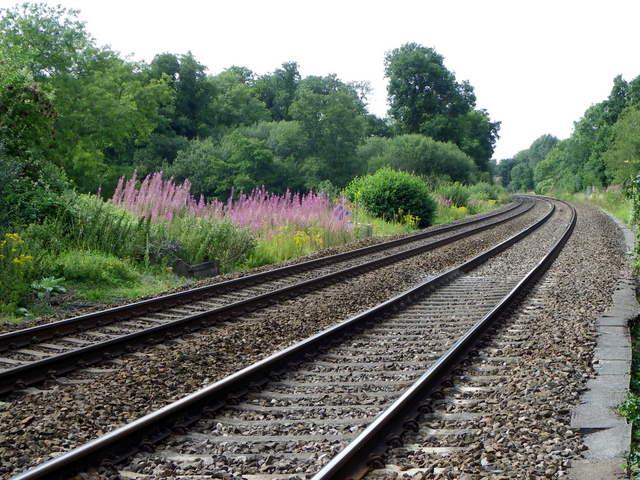 Fireweed by the railway, Sherrington Lane