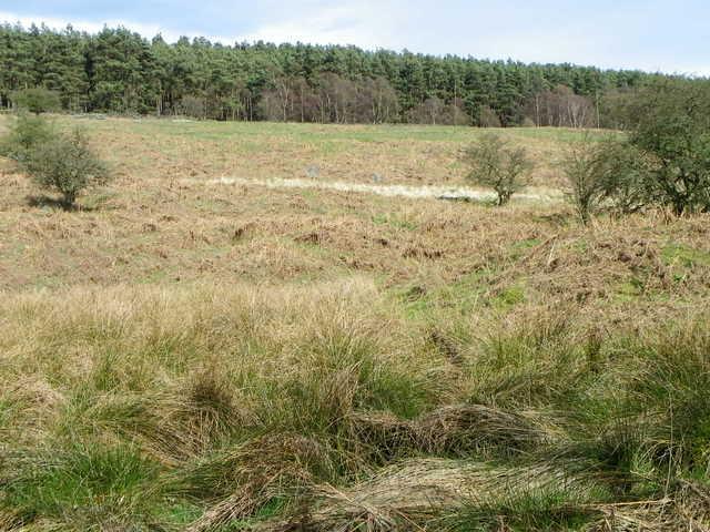 Rough grassland near Colsterdale