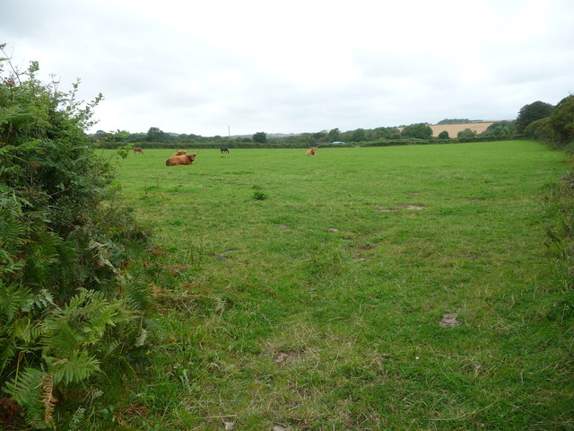 Cattle and horses share a field near Wallas Farm