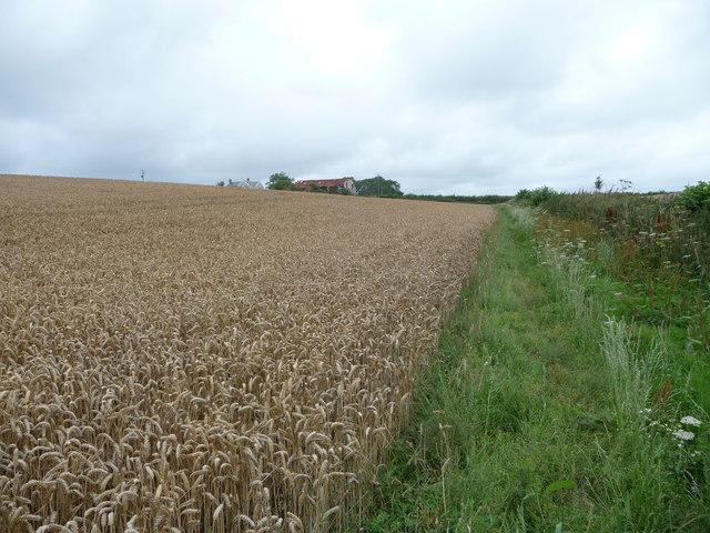 Footpath along the field edge