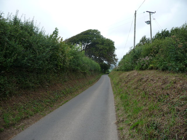 Wind sculpted tree above the lane