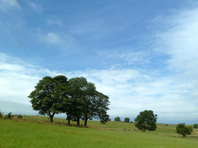 Trees under a summer sky
