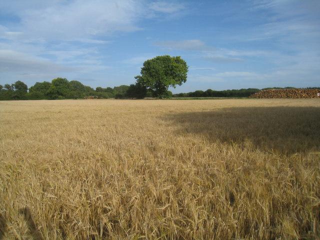 Hansfords Field - Breach Farm