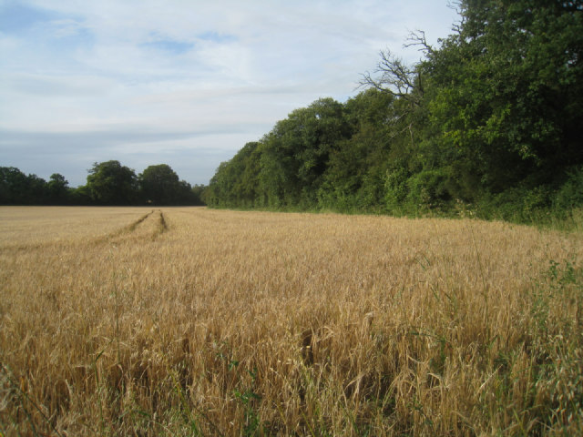 Well's Copse
