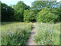 TQ4367 : Path in Jubilee Country Park by Ian Yarham