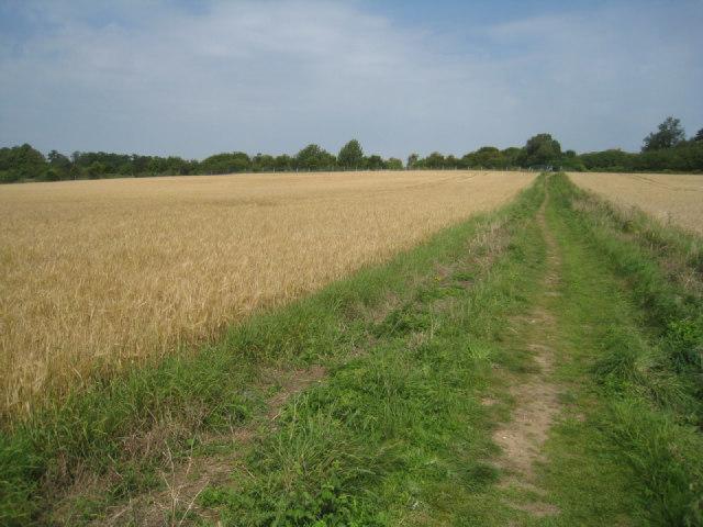 Path through the wheat fields