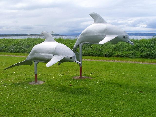 Dolphins, Ardersier