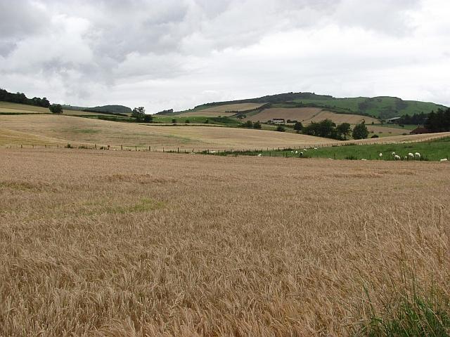 Barley, Grange of Lindores