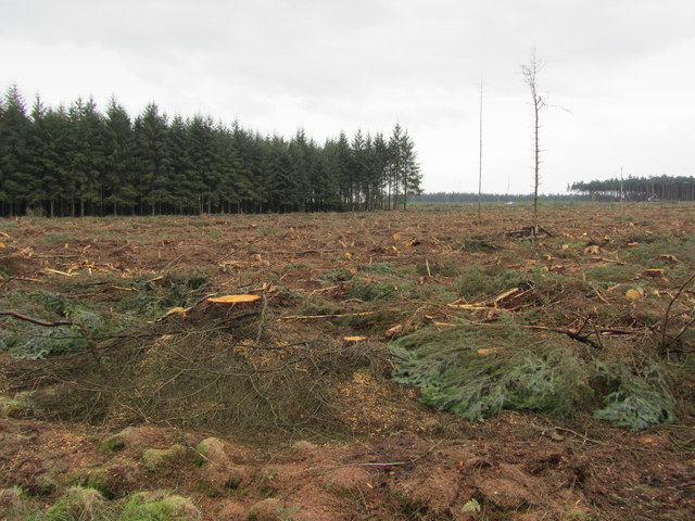 Felling in Stainburn Forest