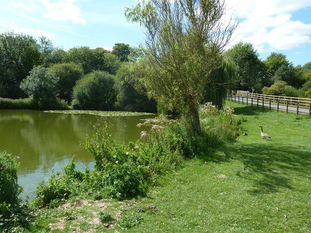 Pond opposite All Saints