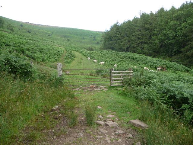 Sheep graze below the Sugar Loaf