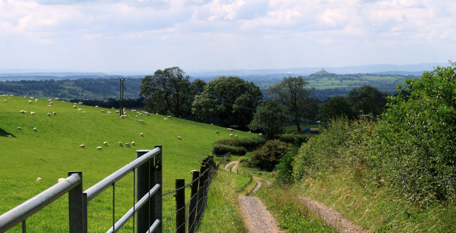 2011 : Farm track and sheep on Whitstone Hill