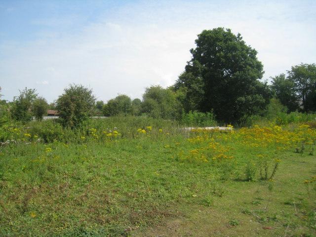 Overgrown paddock