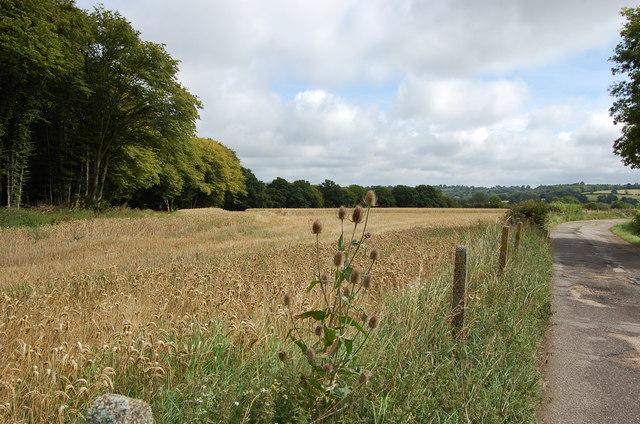 Crop Field by driveway to Squib's Farm