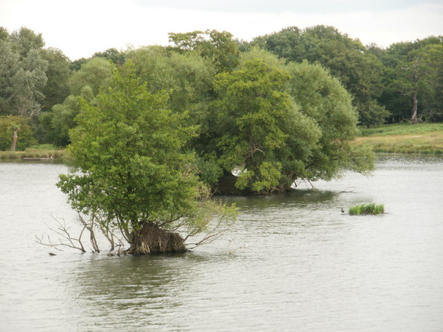 Tree-clad islands, Pen Ponds, Richmond Park