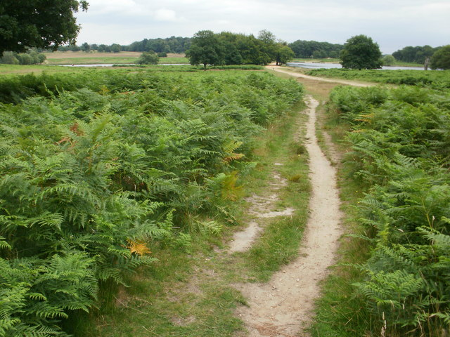 Richmond Park - track leading to the Pen Ponds