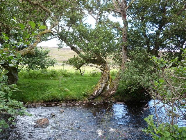 River bank, Strath Carnaig