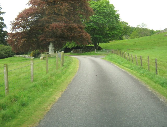A lovely copper beech on the driveway to Kirroughtree House