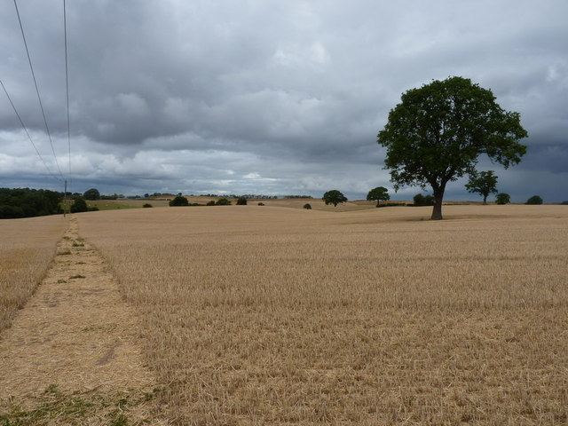 Footpath and an isolated oak tree, Betton