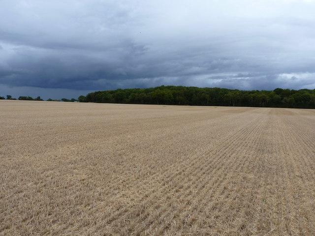 Betton Coppice across a harvested wheatfield