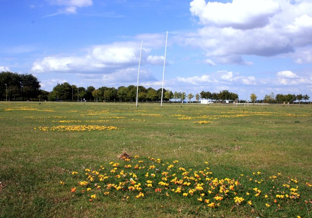 Wildflower on the Rugby Field