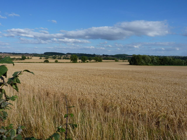 Wheatfield at Stanlow