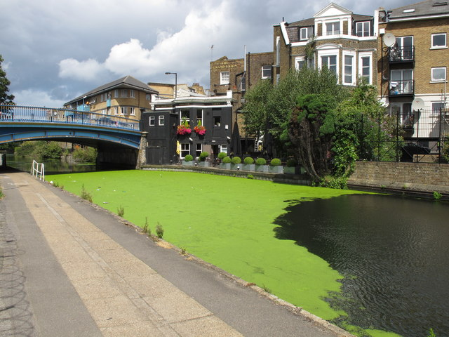 Duckweed by the Grand Union public house