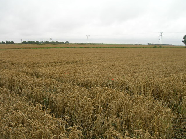 Farmland, Goole Fields