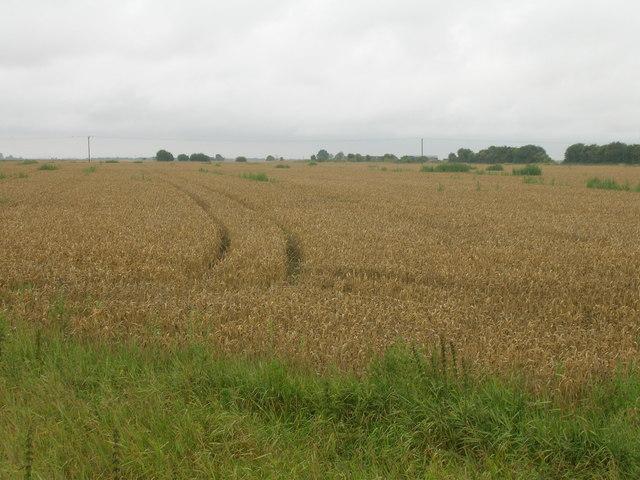 Farmland, Goole FIelds