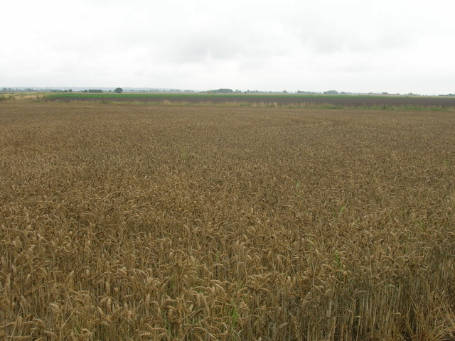 Farmland off the A161