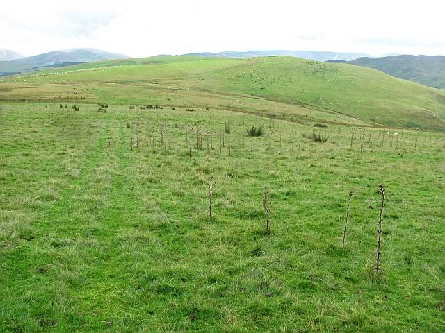 Improved grazing, Hamildean