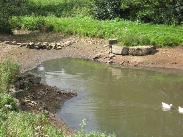 Duck pond with ducks