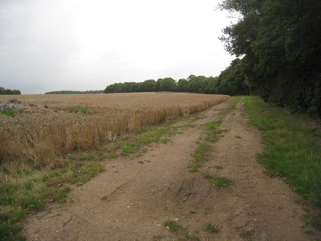 View alongside a shelter belt near Barrow Grange