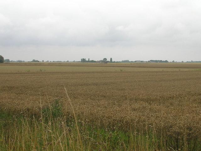 Farmland south of Whitgift