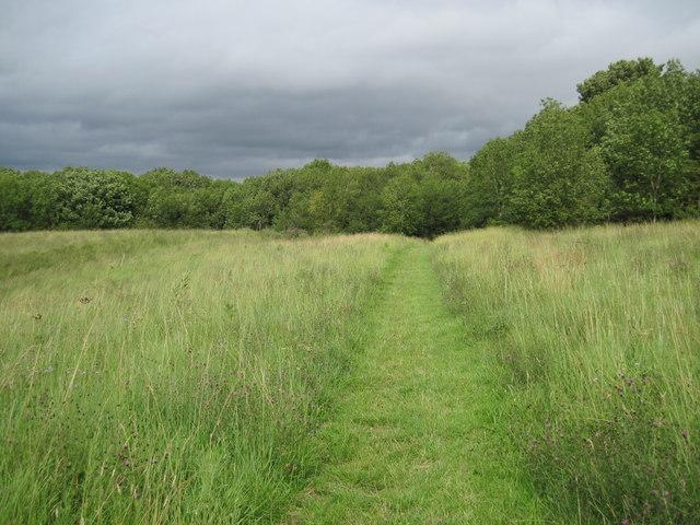 Centenary  Way  into  Brow  Plantation