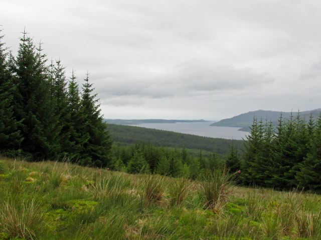Forestry on Cnoc Carrach