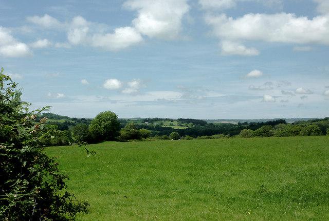 Pasture near Olmarch, Ceredigion