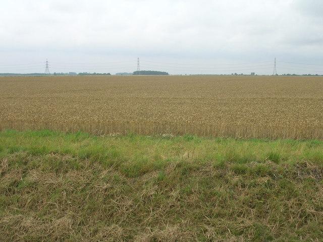 Farmland west of Hoggard Lane