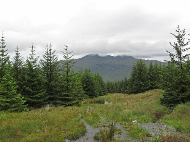 Forestry below Mam an Trotanaich