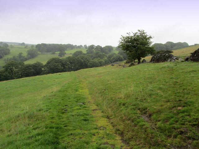 Bridleway above Lindley Wood (2)